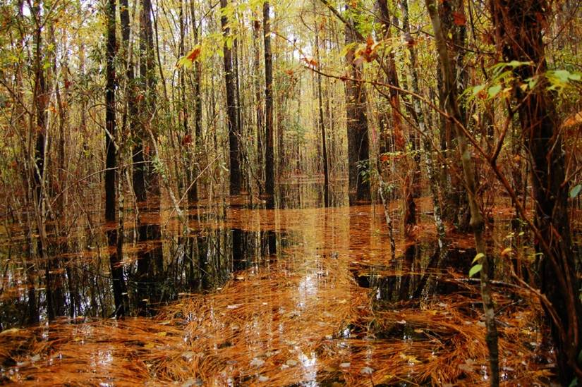 forested_wetland22bcbbc