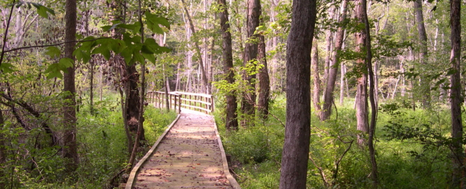 Francis Marion Sumter National Forest
