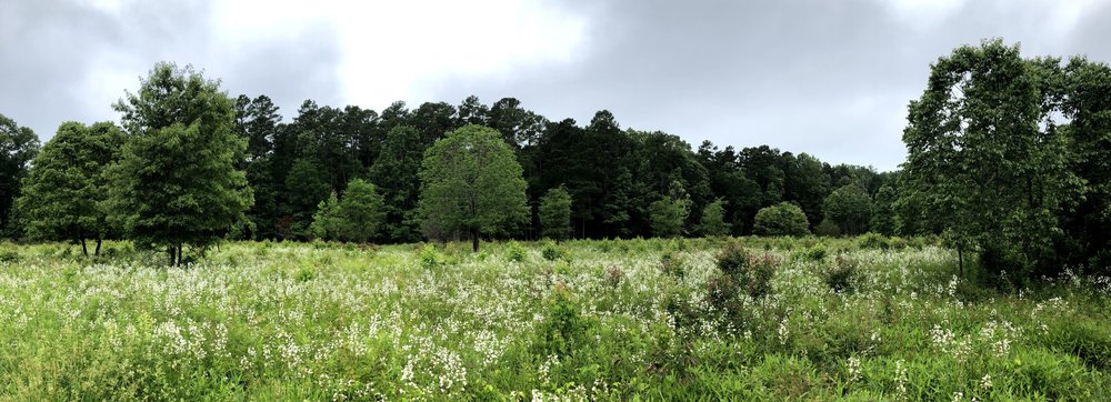 Piedmont prairie at Mason Farm in Chapel Hill, NC