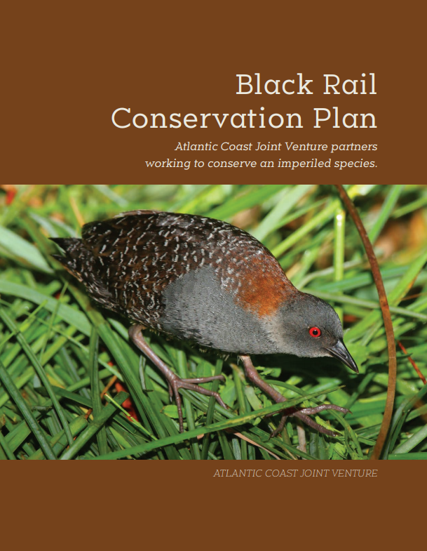 cover of Black Rail Conservation Plan